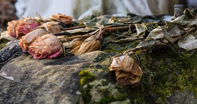枯れてしまった薔薇の花