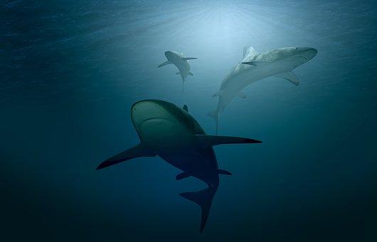 3頭のサメが泳いでいる