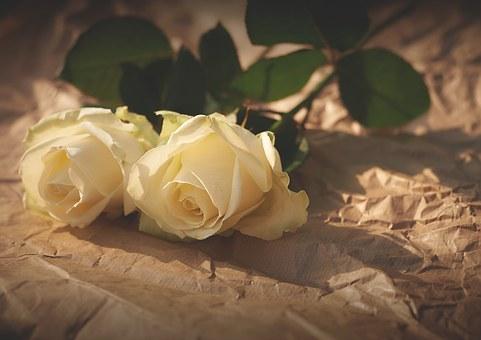 2輪の白い薔薇
