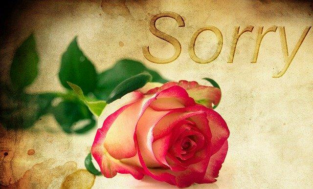 赤い薔薇とsorryの文字